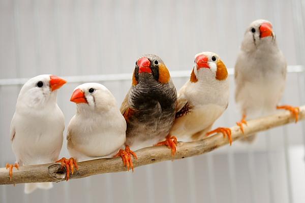 اجمل عصافير العالم _MG_7098.JPG